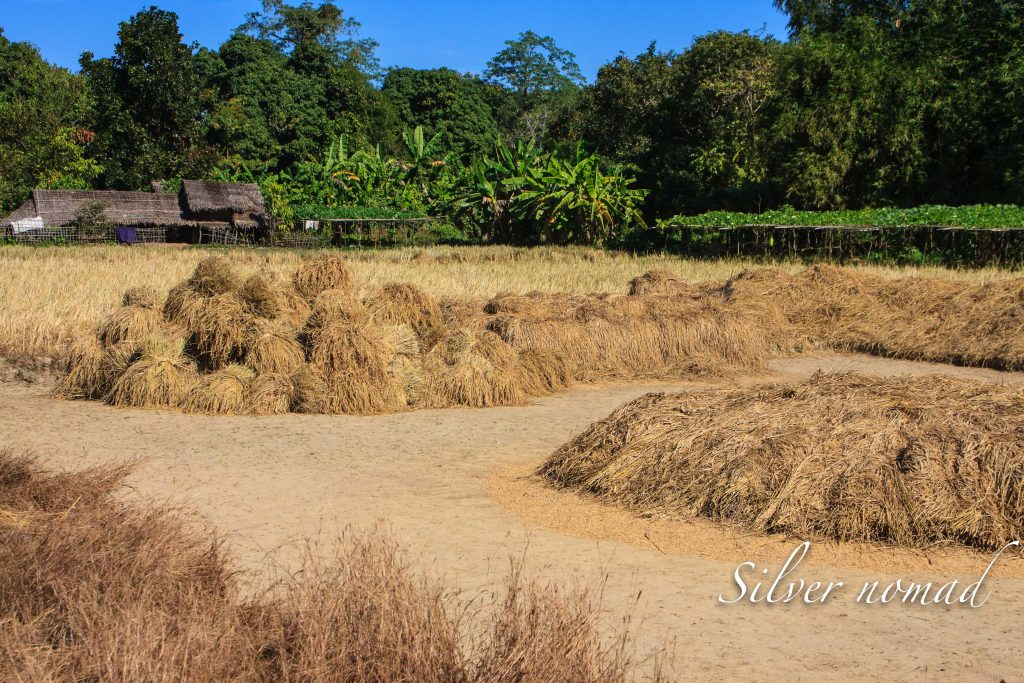Threshing area