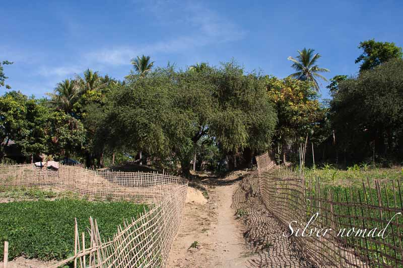 Path to the village